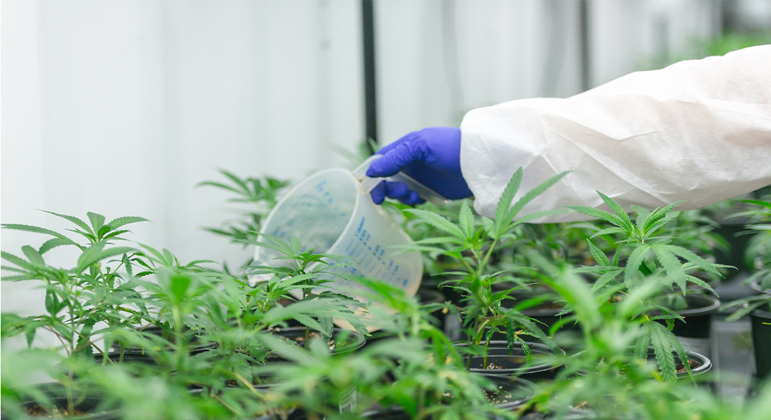 Federal Court Dismisses Weed Researchers' Lawsuit Against the DEA
