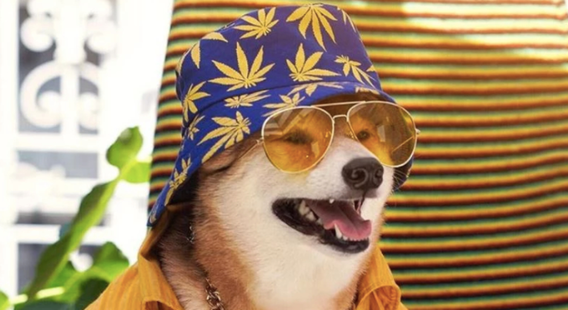 More Dogs Are Being Named After Weed Strains Than Ever Before