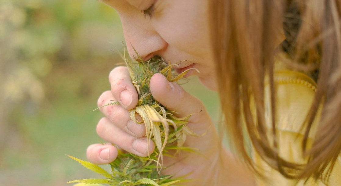 Weed 101: What Does Good Weed Smell Like?