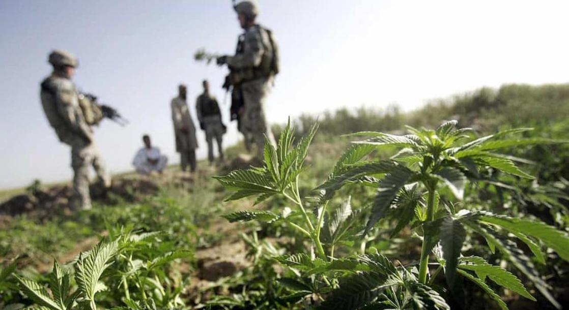 Congress Screws Veterans on Medical Marijuana Rights — Again