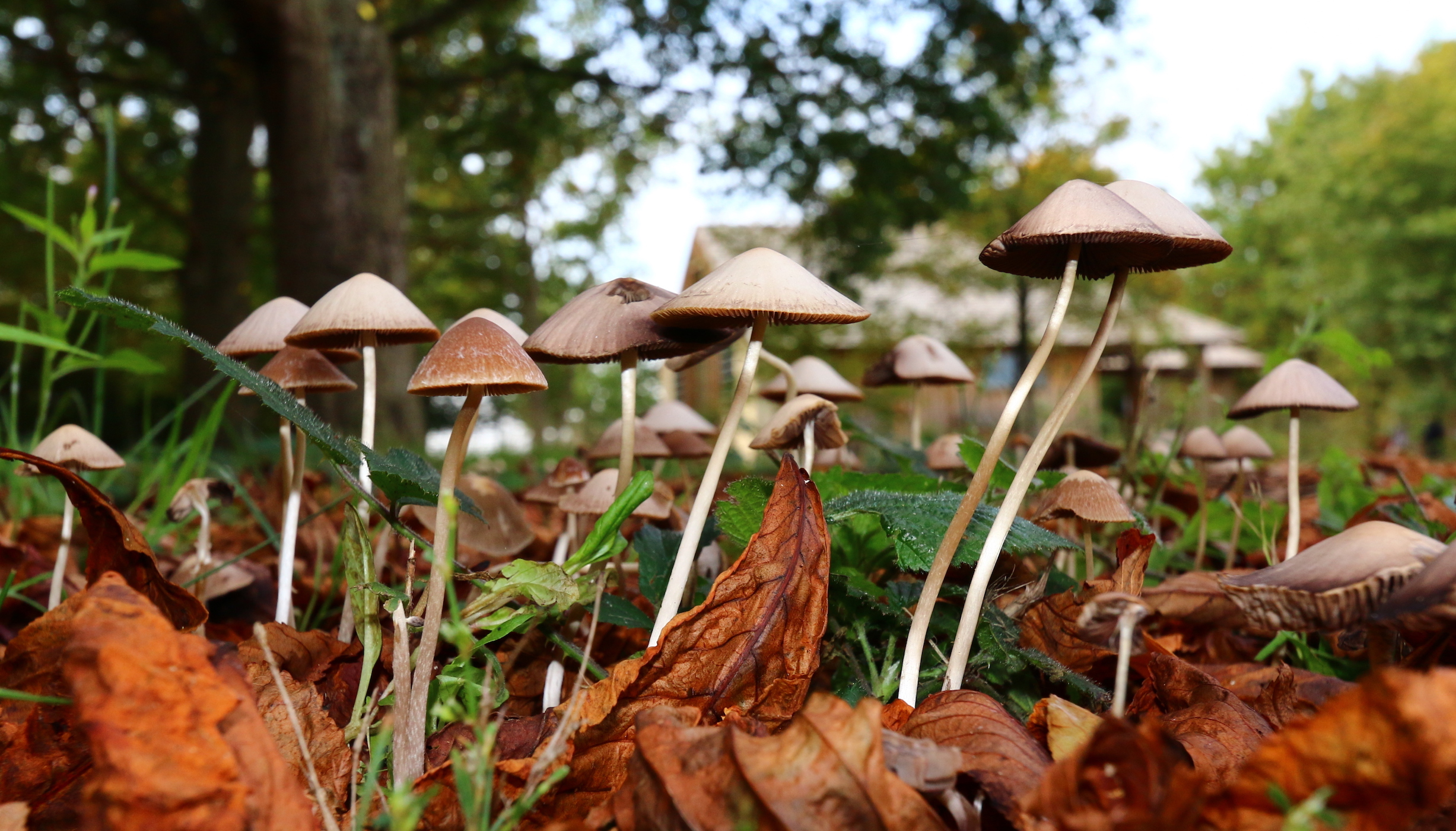 1578622804288_California-could-legalize-psychedelic-mushrooms-next-year.jpg