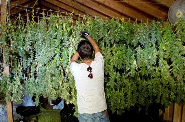 1578959695550_Campaign-2016-Marijuana-Emerald-Triangle1.jpg