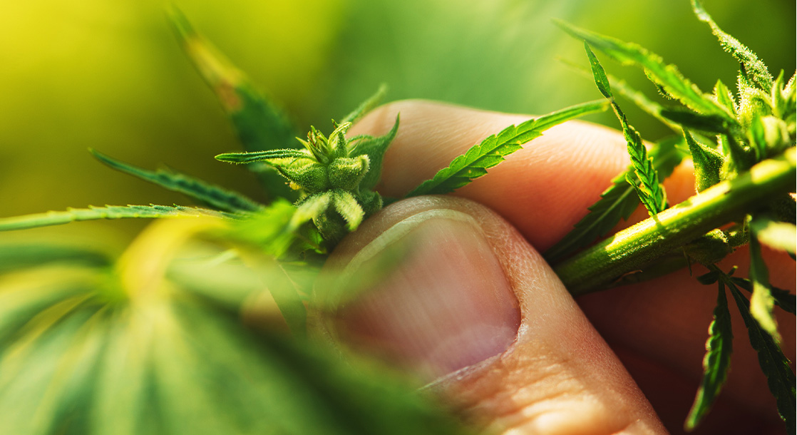 Why Regenerative Farming Is the Future of Ethical, Eco-Friendly Cannabis Growing