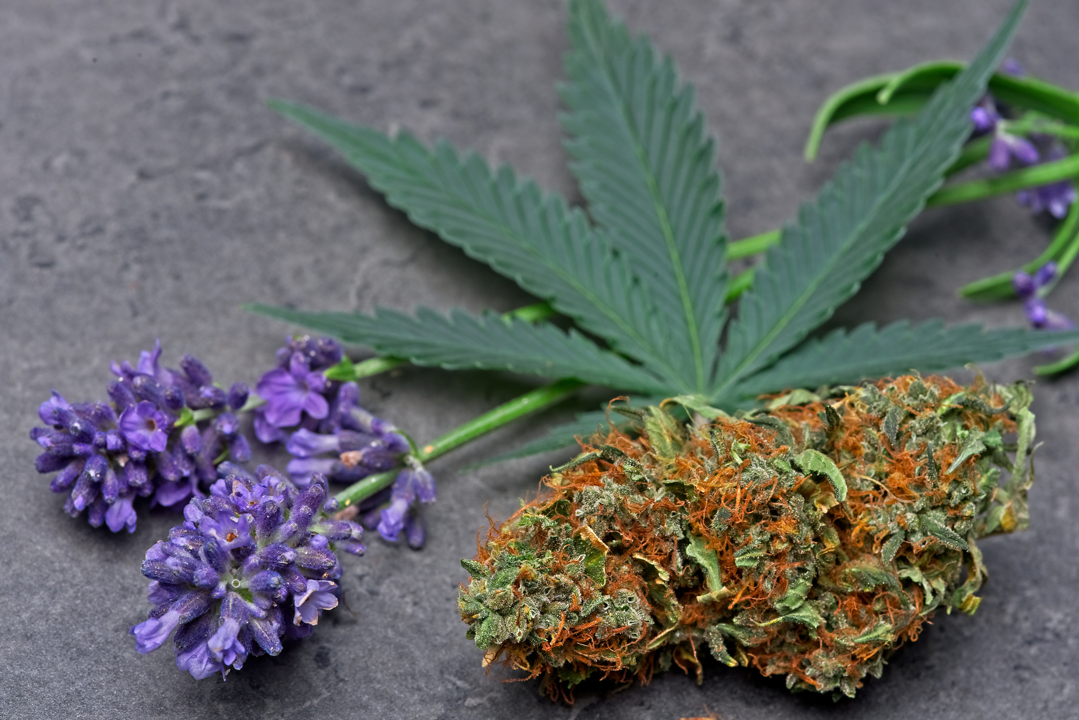 Can Cannabis Terpenes Really Customize or Direct Our Highs?