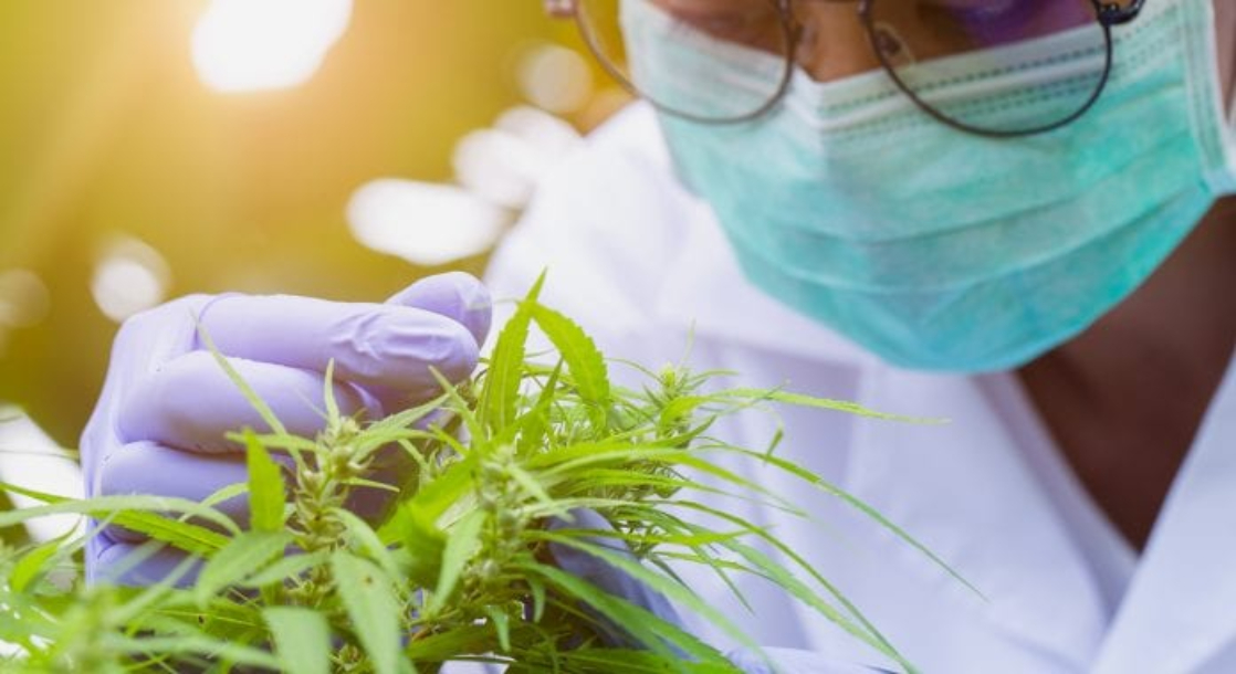 A US Medical School Is Finally Taking Medicinal Cannabis Seriously
