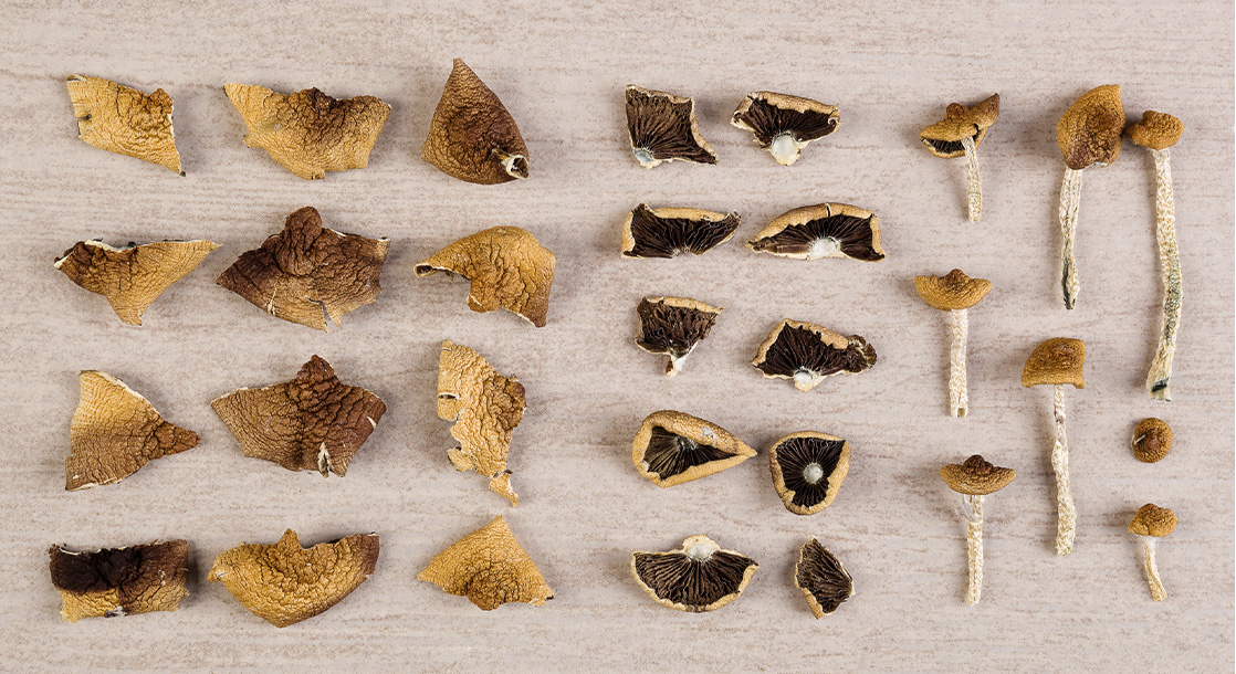 What Are the Differences Among Magic Mushroom Strains and Their Trips?
