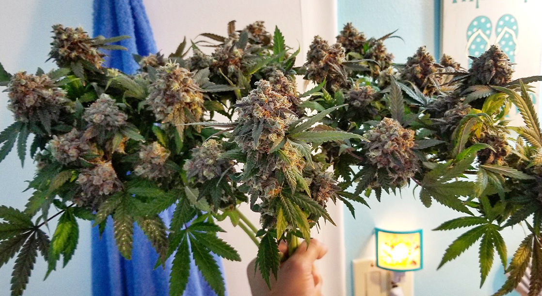 Beautiful Bud Bouquets Full of Our Favorite Type of Flower