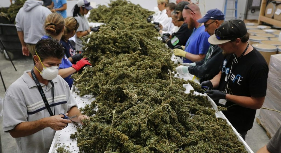 The Legal Cannabis Industry Has Created Almost 250,000 Jobs in the US