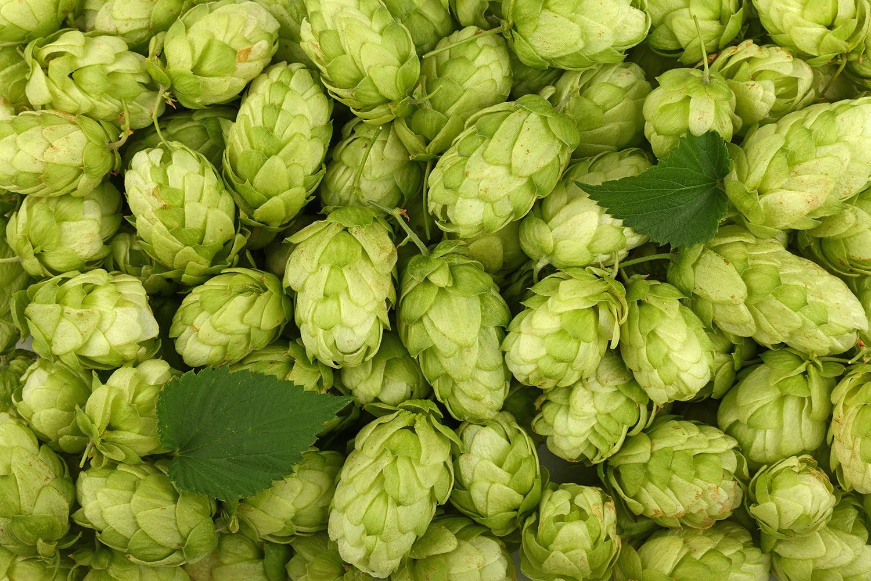 1592942281908_full-frame-shot-of-beer-hops.jpg