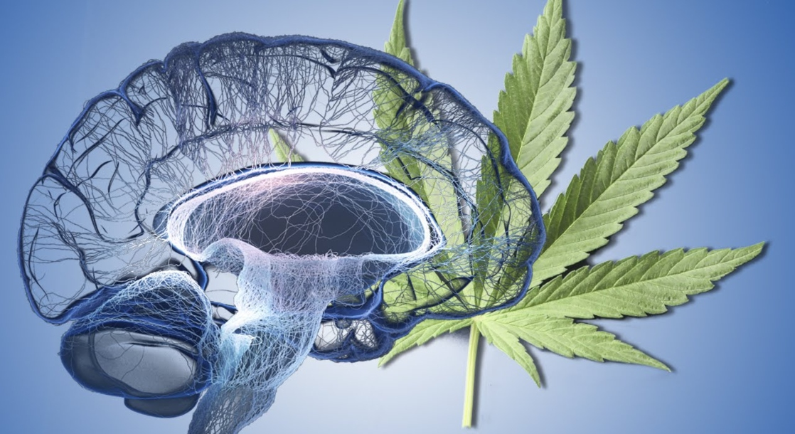 Consuming Pharmaceutical THC May Help Treat Alzheimer's Symptoms, Study Says