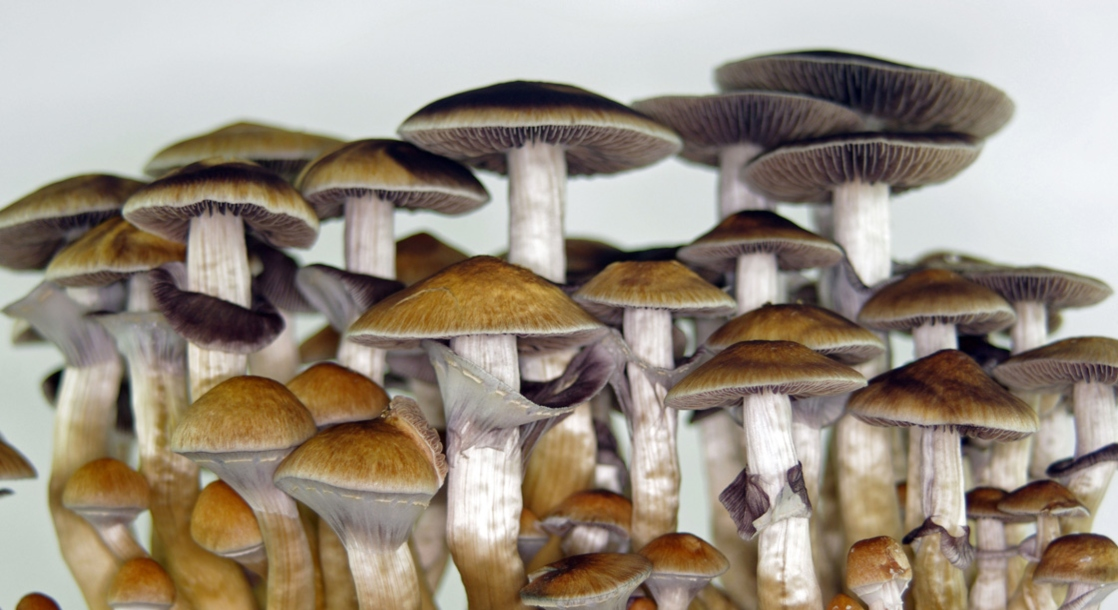 Canada Is Allowing Terminally Ill Patients to Use Psilocybin Mushrooms for End-of-Life Therapy