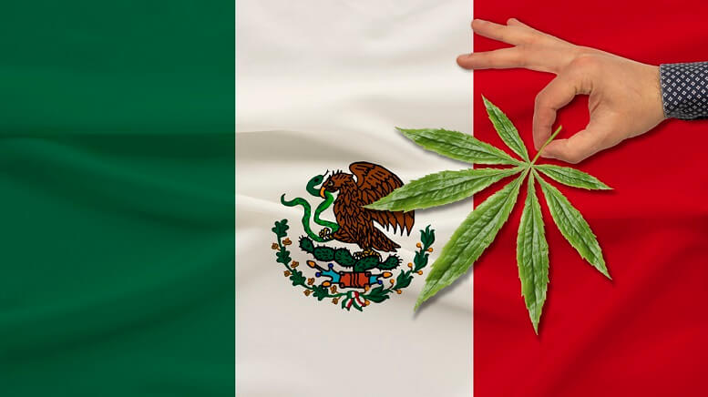 1617902034051 Mexico Cannabis 1