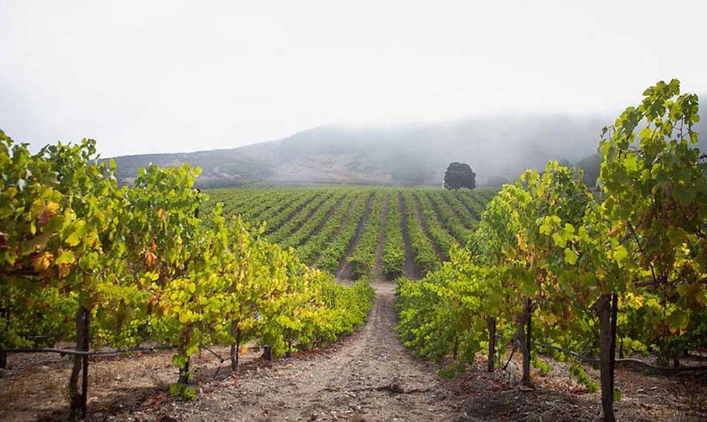 1621445996404 santa ynez valley vineyard tour