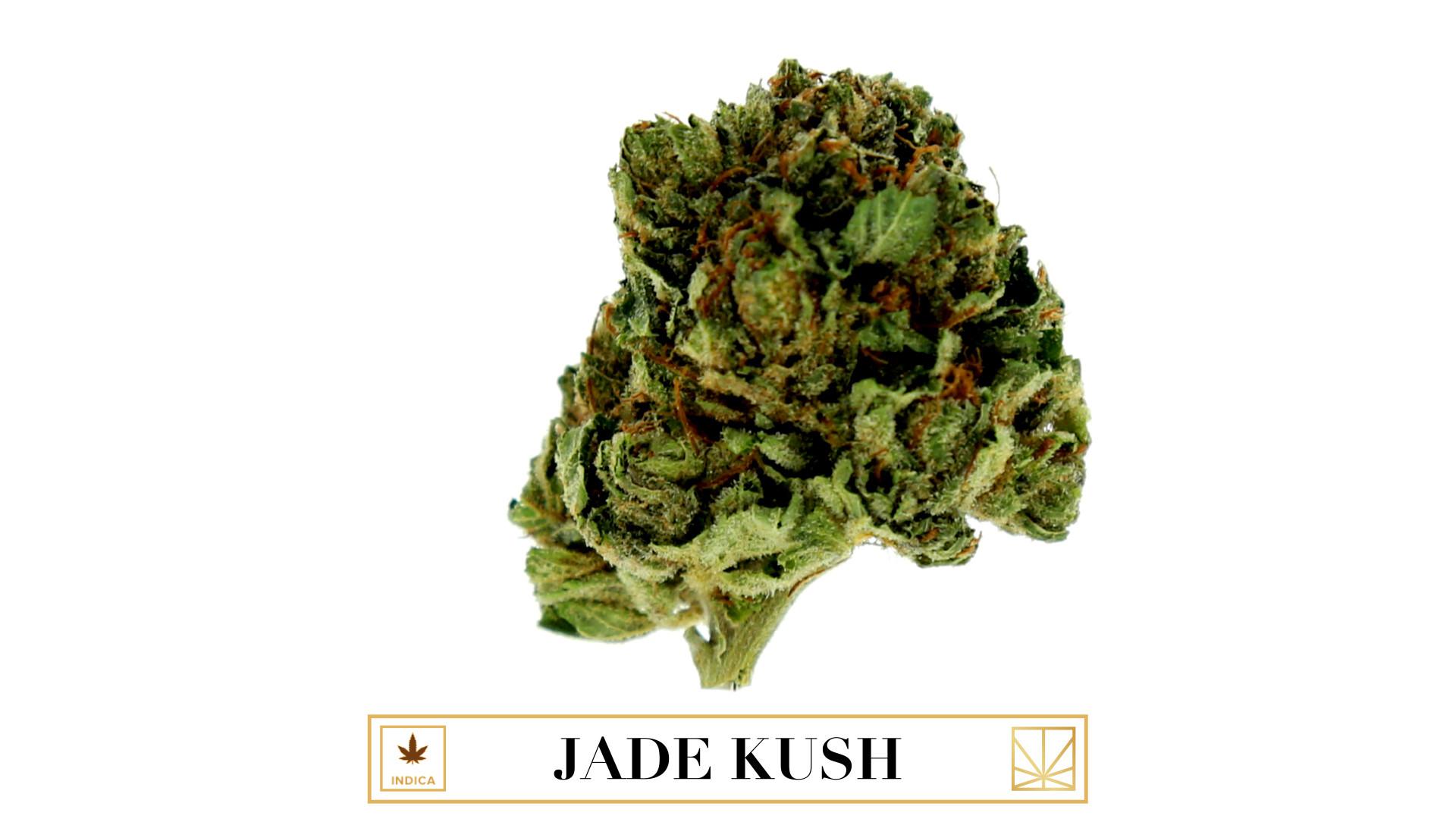 Jade Kush Gallery Adult, Blowjob Fotos-8820