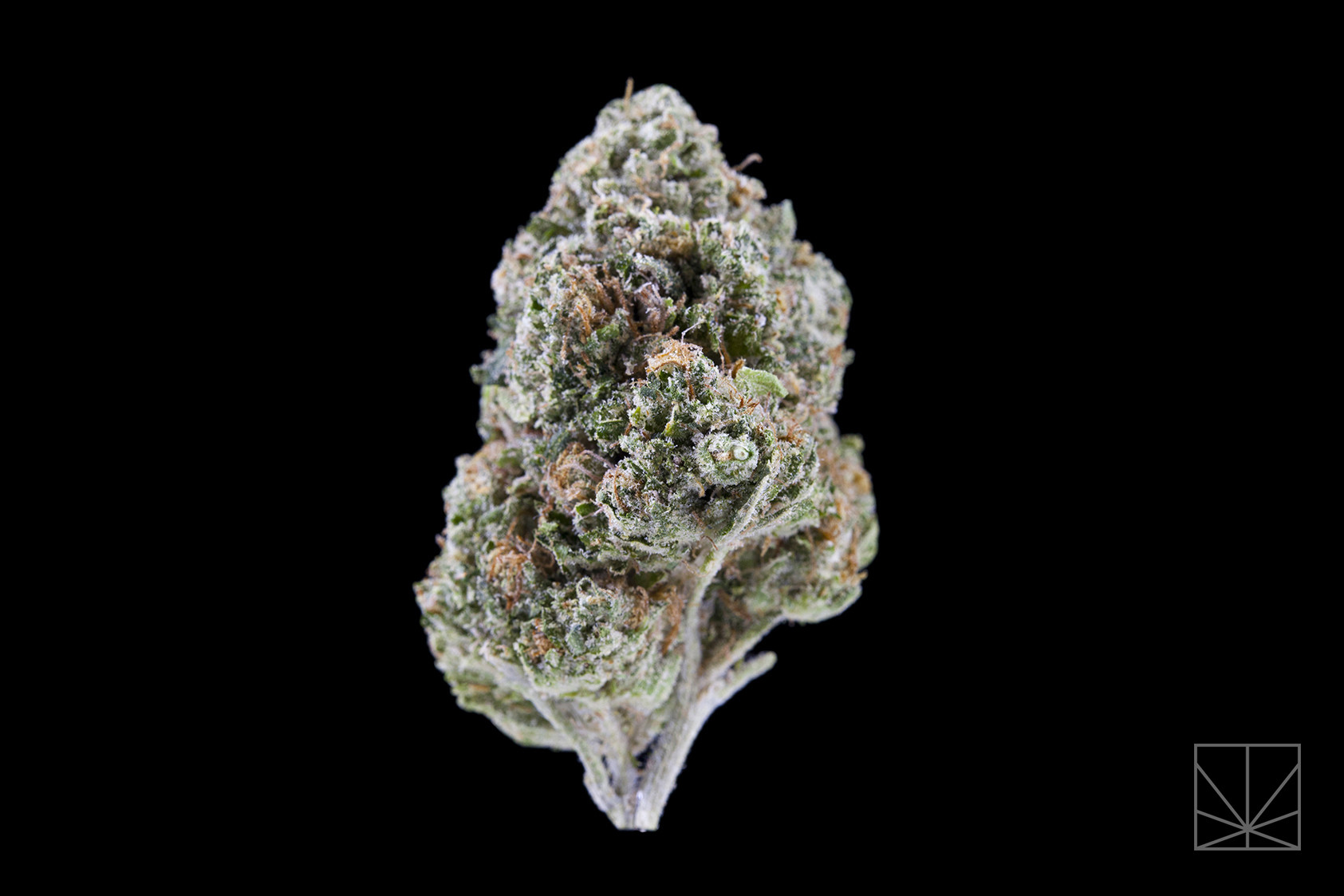 "<p><em>""Oh, I think I've landed in a world I hadn't seen""</em></p>