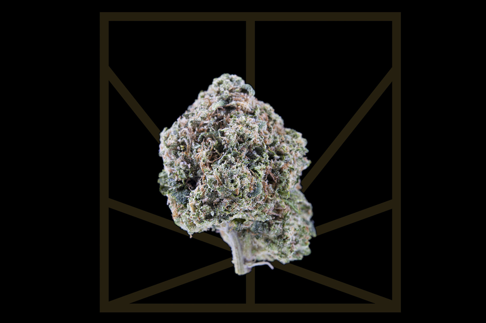 """<p><em>""""Can you roll this blunt for me? / I'm just tryna smoke this weed / I spend all my life intoxicated.""""</em></p>  <p>Fire OG has major bag appeal. This is a classic OG with a lemon and pine scent that almost makes you feel """"Intoxicated"""" before you ever take a hit. These dense buds are covered in trichomes and have bright red hairs - Fire OG's flames - all over. Once you take a hit, the balanced effects of this hybrid come on fast. Fire OG is a cross between knockout indica San Fernando Valley OG Kush and hybrid OG Kush that relaxes the body and stimulates creativity. This is a happy yet sleepy high that uplifts the mood but weighs down the eyelids.</p>"""