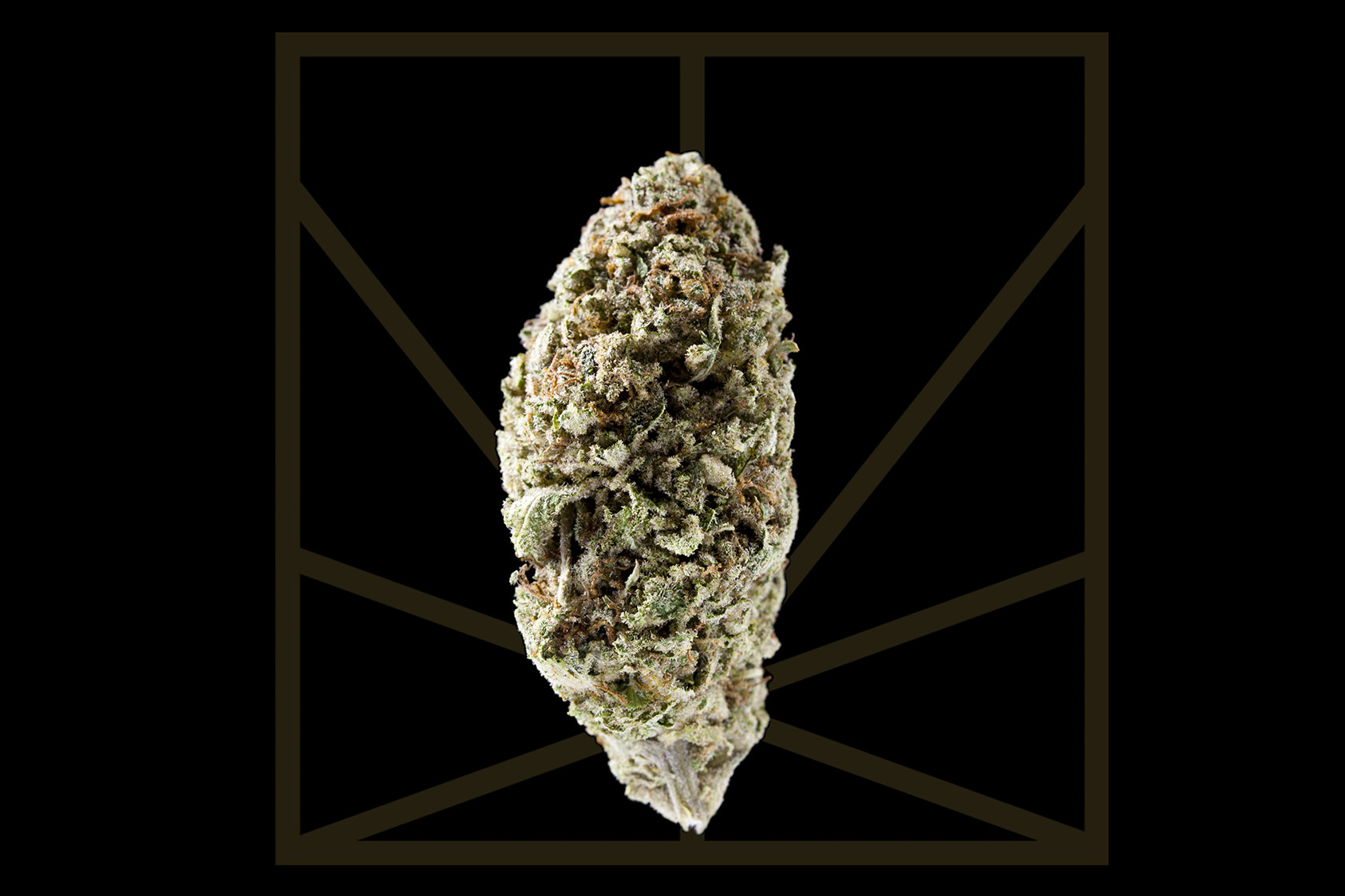 "<p><em>""Always know when the sun rises and falls / Just to keep you out of the clouds""</em></p>