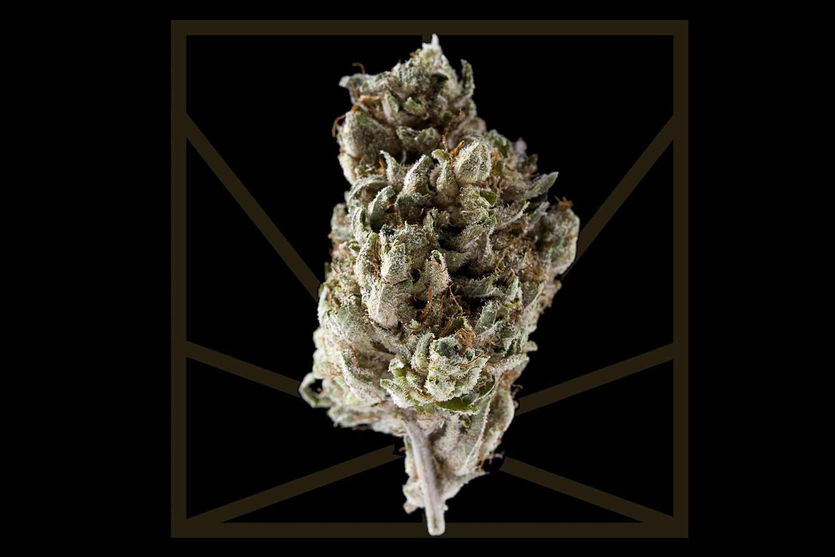 "<p><em>""We got pretty stars and the boulevard, and we ridin high / We off them California vibes.""</em></p>