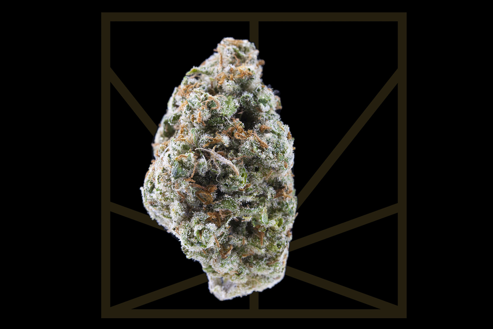 "<p><em>""Do you hear me, do you feel me? We gon' be alright."" </em></p>