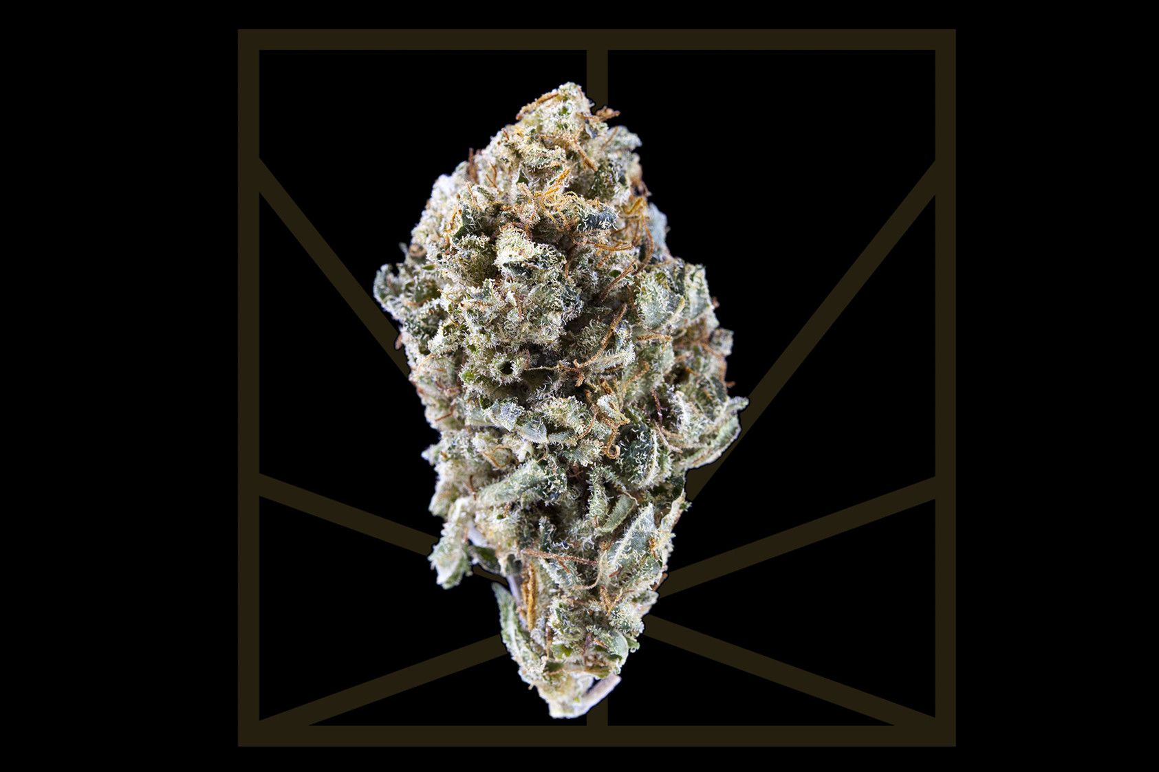 "<p><em>""Flexing like a yogi, drop it down with your hands up / Do a handstand, bend it back, put your legs up / I ain't got no worries, I'm my own private dancer""</em></p>
