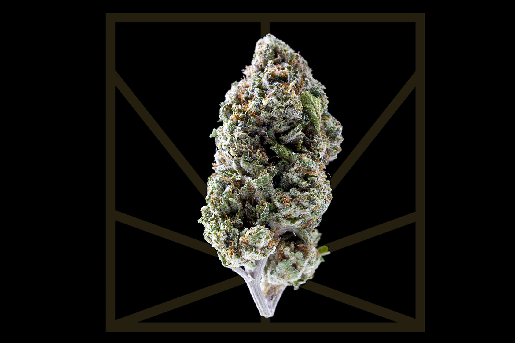 """<p><em>""""My kush pack so loud that now / I'm lounging in the shadows of clouds, wow.""""</em></p>  <p>OG Kush is the true definition of an OG. This multi-award-winning hybrid's imprint is all over some of today's best cannabis options. OG Kush has been used to create several phenotypes including SFV OG, Platinum OG and Louis XIII - all bonafide stars in their own right. OG Kush, like many of its descendants, has a distinct pine and citrus flavor. These small tight buds pack a big punch. OG Kush's euphoric and uplifting effects kick in swiftly like, """"Hey!"""" and last for hours. The body high is intense but not heavy enough to immobilize more experienced smokers.</p>"""