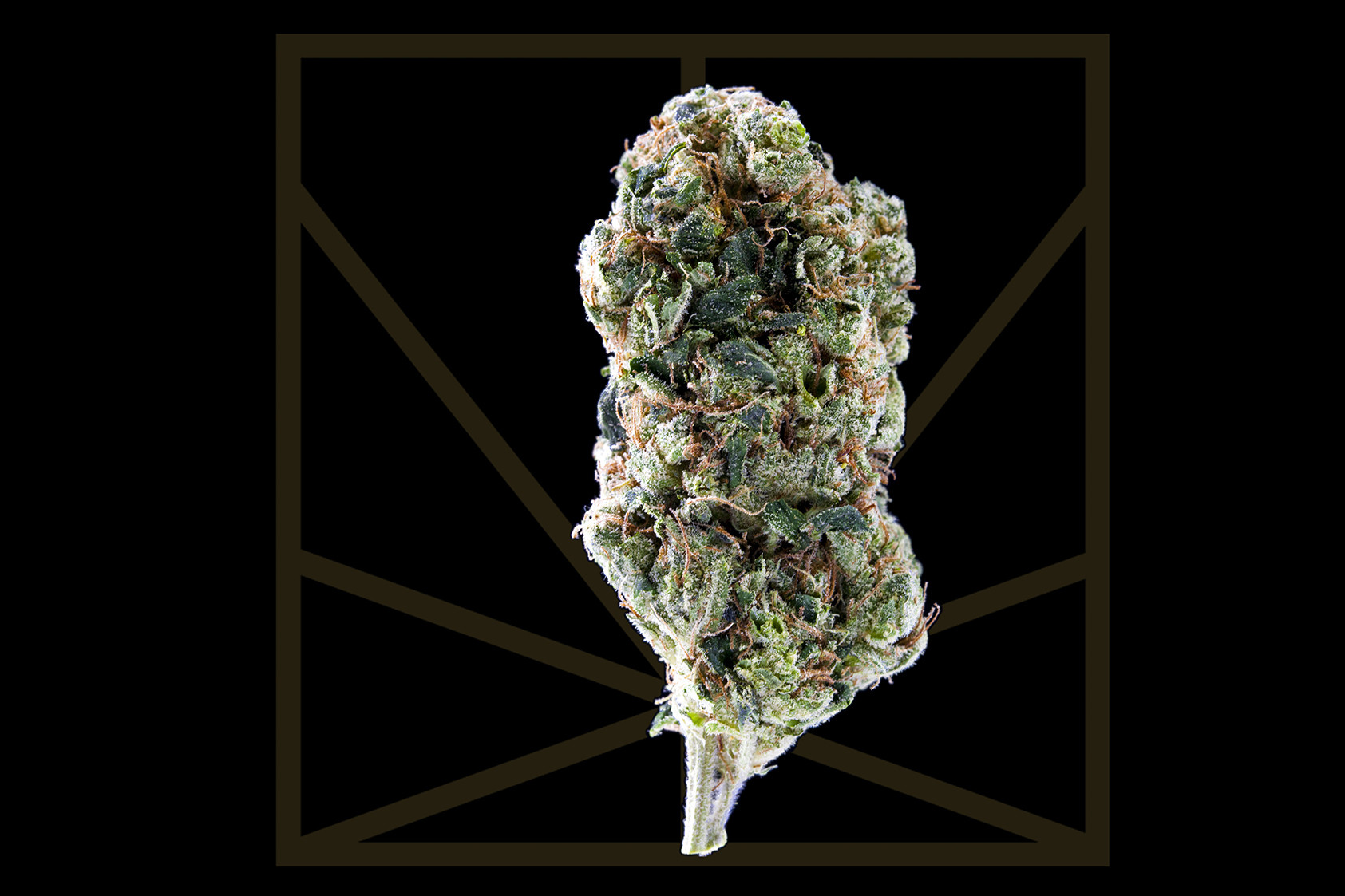 "<p><em>""A new world hangs outside the window - beautiful and strange.""</em></p>