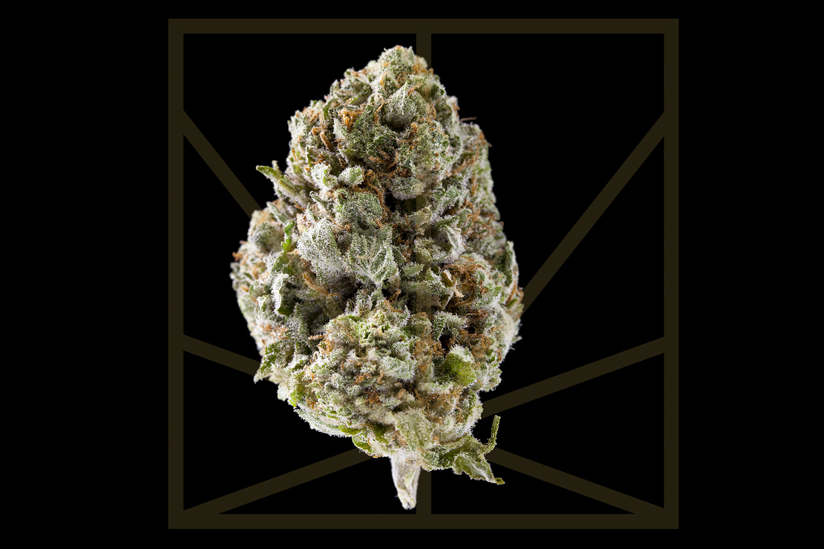 """<p><em>""""And if the stars should fall from the sky, I will put them all back in time / So you know that when they shine, they shine for you."""" </em></p>  <p>Sure, it's lacking some of the qualities often associated with purple bud but, just because Purple Alien OG doesn't smell like grape Skittles, doesn't mean this quality strain should be overlooked. Purple Alien OG is a happy and giggly cross between Las Vegas Purple Kush and Alien OG. Be sure to """"Look Up"""" and take in the sky while experiencing this euphoric high. This fast-acting hybrid provides a relaxed body high that obliterates pain and muscle tension. The cerebral energy Purple Alien OG provides is enough to keep you social in a relaxed environment but probably not enough to keep you alert during the workday. Netflix and chill, anyone?<br /> <br /> </p>"""