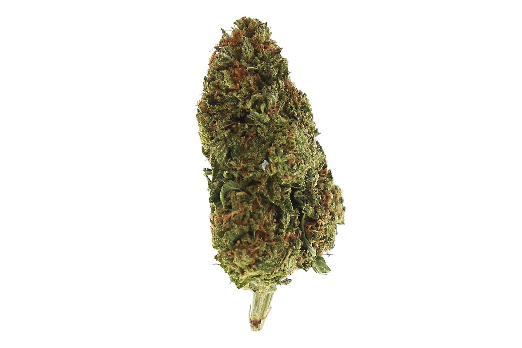 Betty White Weed Strain - SATIVA Marijuana Strains