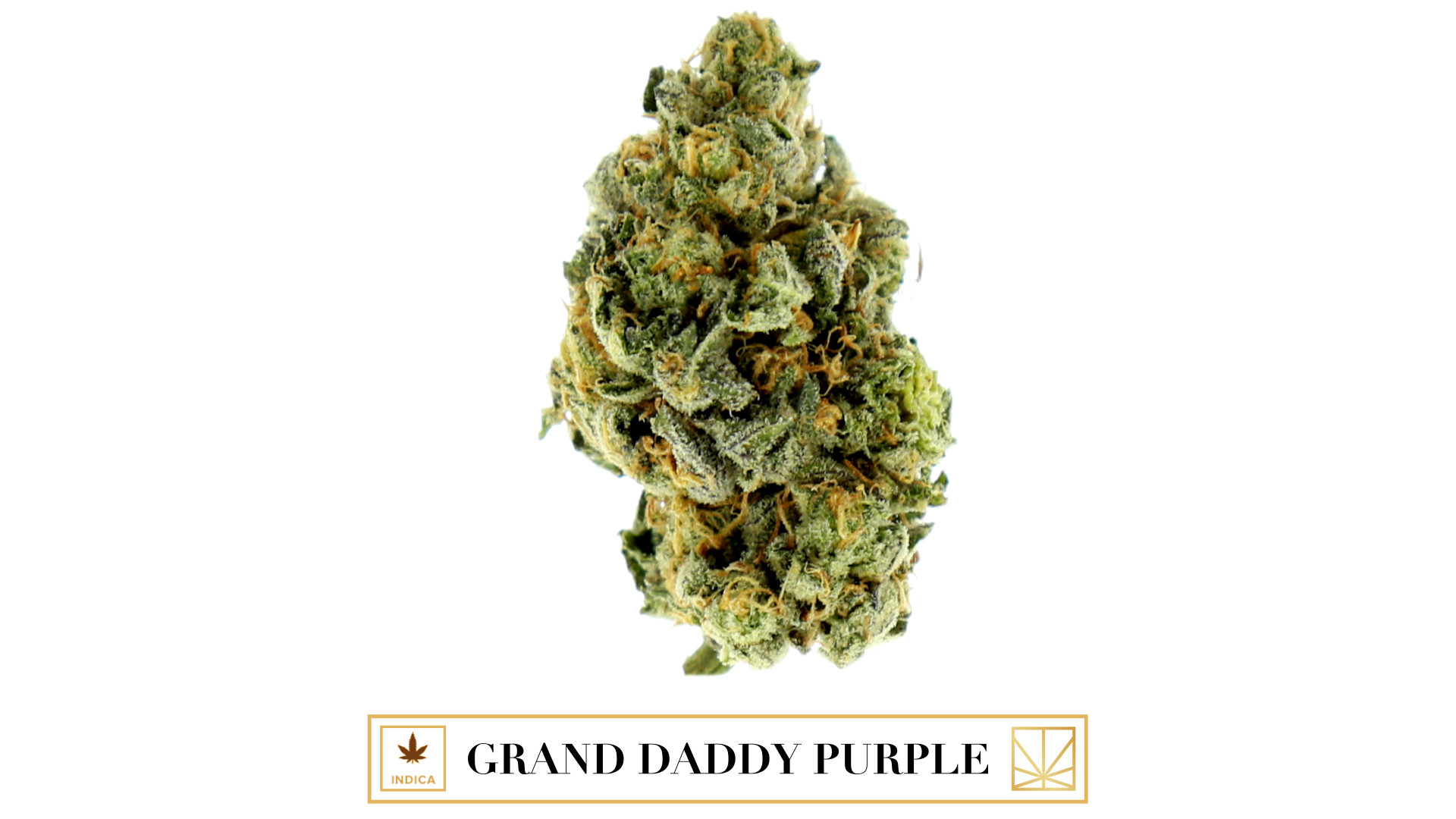 """<p><em>""""I just smoked me some purple / Now I'm waiting for my high to come down.""""</em></p>  <p>With dense deep purple buds and clusters of thick orange hairs completely covered in crystals, Grand Daddy Purple, also known as GDP, is almost too pretty to smoke. If you manage to stop staring at this natural work of art long enough to spark it up, you'll see that he's more than just a pretty face. A cross between indicas Big Bud and Urkle, Grand Daddy Purple has a delicious sweet grape flavor. The intense effects of GDP completely relax the body and the mind. Not a completely anti-social strain, Grand Daddy Purple encourages happiness but will slow you down enough that you won't want to engage in any friendly debates until you wait for your """"High 2 Come Down.""""</p>"""