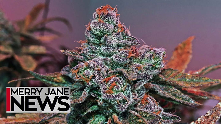 5 Predictions for the Future of Weed   MERRY JANE News